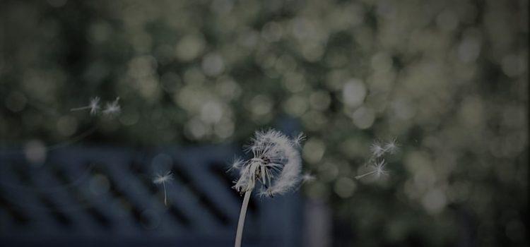 Vjetar